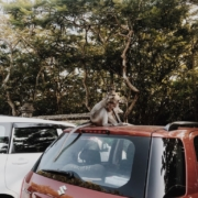 1 Ubud Monkey Forest