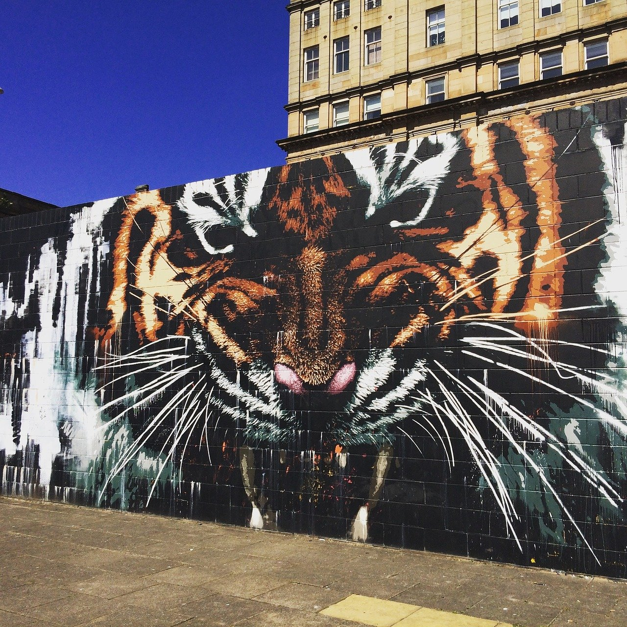 Glasgows Mural Trail Tiger