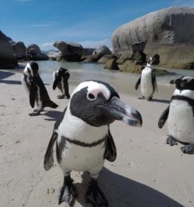 Kapstadt Strand Besuch