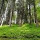 Schwarzwald Schiltach