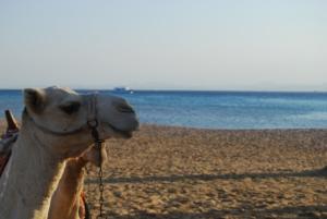 Soma Bay Beach Life